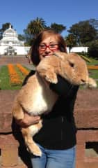 """Meet """"Tank"""" my handsome hunk of a neutered Flemish Giant rescue rabbit. We had a very trusting relationship and he taught humane education classes with me and visited schools and nursing homes. One-of -a kind sweetheart."""