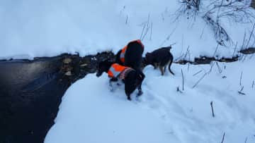 A typical hike with my 2 dogs and another dog I am sitting