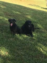 Partners in crime- Marley and Boone