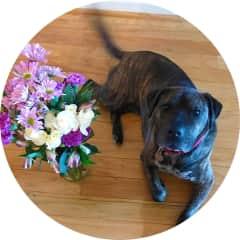 I got flowers!