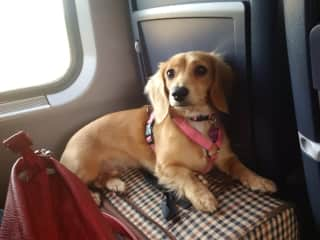 Elsa, on the the train in Europe.