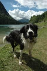 Barnaby after a mountain lake swim