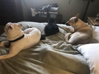 My dog, Bailee; my dog Tyson; my cat Bitbit. ❤️