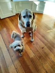 Max and Pip.