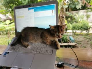Part-time team member: kitty Kratong
