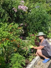 Taking care of a productive vegetable garden in El Valle Panama