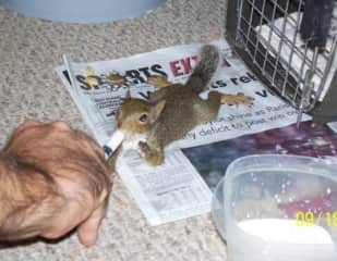 My family rescued two baby squirrels that fell out of a tree during a rainstorm. We fed them by hand and watched them grow. It was an amazing experience.