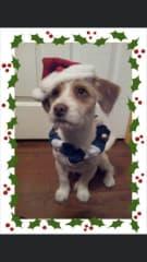 My girl Sasha, Christmas 2012.