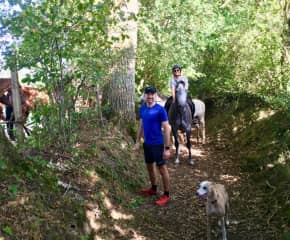 In the forest taking the dogs and horse for a run/walk