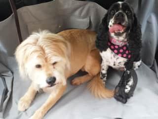 Mona (Left) & Chloe (Right)