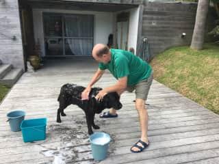 Don grooming sweet Cooper in New Zealand
