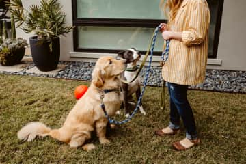 Attentive, patient training begets attentive, patient dogs