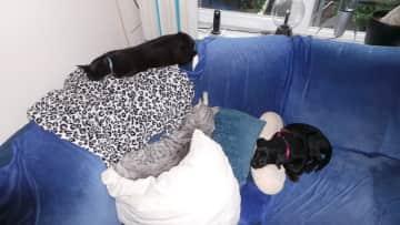 Bella, Sjonnie, and Snoepie