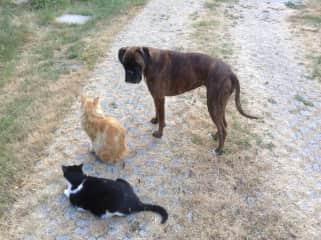Bacarra & cats