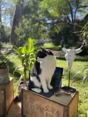 Monty helping me work!
