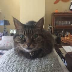 Sophie, cat number 3/3 in Toronto