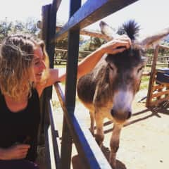At the donkey sanctuary that we support in Andalucia