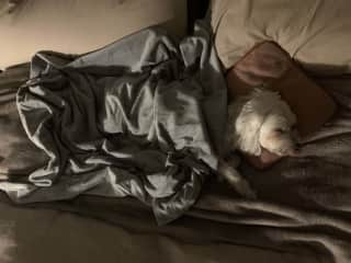 He has a special blanket and pillow he loves - and knocks out...