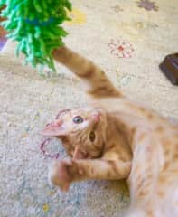 Kitty play time!