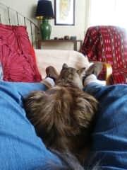 Housesitting with Kallie