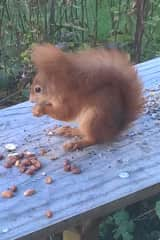 Sammy Squirrel, no need to look after him, he looks after himself