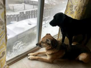 Two epic Dogs, Port McNeill, BC 2/2019.