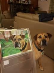 My sister's dog Benji and my pastel drawing of him!