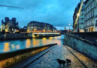 Sitting Jasper with Jazz in Paris January 2020