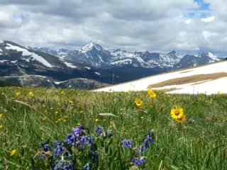 Wildflowers in summertime