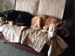 My two sweet dogs that only my heart is with now-as they are in heaven.