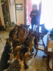 Training Pups