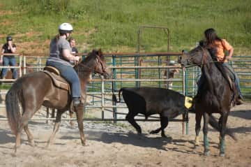 Lori riding Willow in a cattle sort