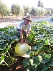 Sam and a giant pumpkin