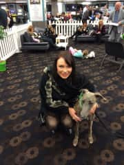 With beautiful Lily the Greyhound in Sydney