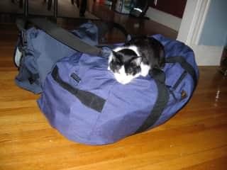 Hannah, welcoming Lynn by commandeering his bags.