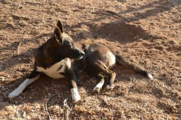 First SIT South Africa: And this is TOGO. OMG, I m loving this strong guy. A faithful soul who does not forgive his love immediately, but if he loves his human - then he `ll always at his side.