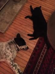 Kitty and Bruno