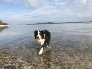 Zena swimming at Bagnalls beach