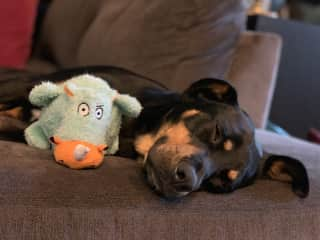 Asleep with her toy.