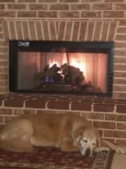 Lanikai in front of gas fireplace logs
