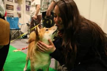 Saying hello to Shiba at National Pet Show