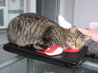 Rosie - With mouse