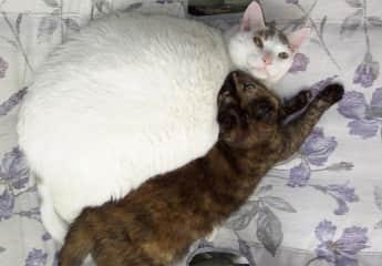Chutney snuggling with Smokey.