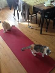 Django &  Loki sabotaging my yoga practice :)