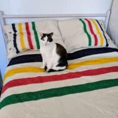 Little Hans in the master bedroom