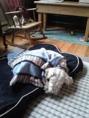Sidnee snoozing it up after a walk to the duck pond :)