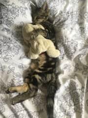 Basil and his teddy bear
