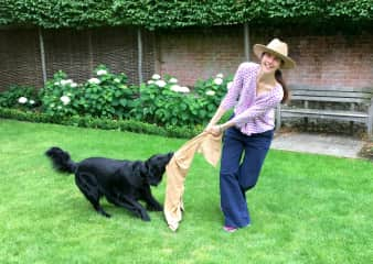 Tug of war with Digby dog in Winchester UK!