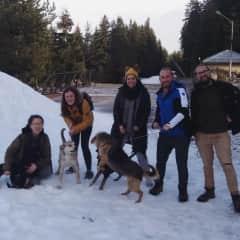 Volunteering with Bansko Street Dogs