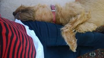 Murphy after a long day!